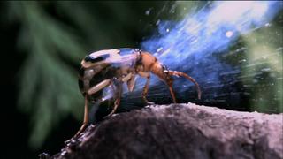 NATURE Documentary Highlights the Animal Kingdom's Misfits