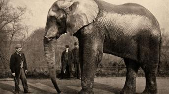 Curator's Choice: Circus and the City