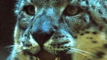 Nature: Silent Roar