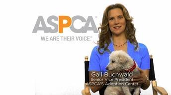 National Volunteer Week: ASPCA