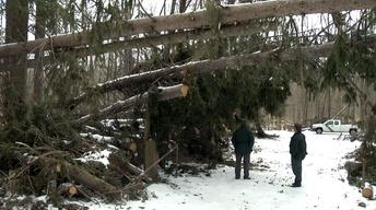 Months After Sandy Struck, Downed Trees Still Remain