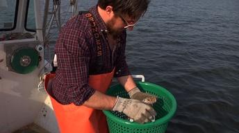 Oyster Farmers Get Back to Barnegat Bay After Sandy