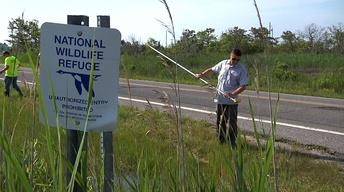 Effects of Sandy Could Increase Mosquitoes, West Nile Virus
