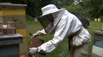 Beekeepers Hope for Better Future After Having Worst Winter