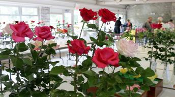 Columbus Rose Show
