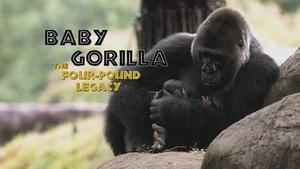 Baby Gorilla: The Four-Pound Legacy