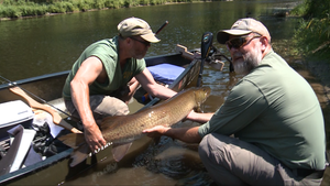 306: Gary Rosenberg: Hunt for the Monster Muskie's