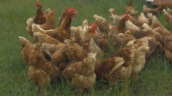 Buvula Farms