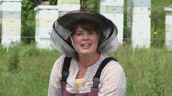 Bees, Teas and Holsteins