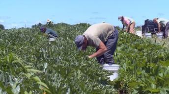 New Bill Would Help Veterans Go Into Farming