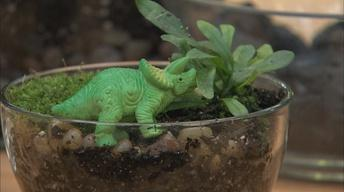 How to Grow a Dinosaur Terrarium