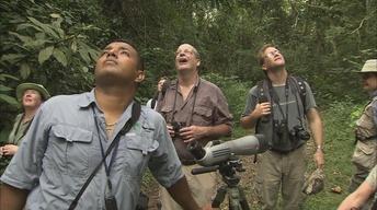 Carlos,  A Birding Guide