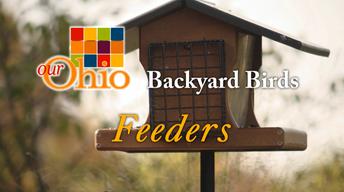 Backyard Birding - Feeders