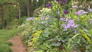 Volunteer Gardener 2545