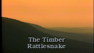 The Timber Rattlesnake