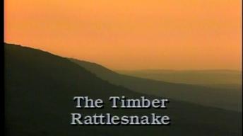 The Timber Rattlesnake