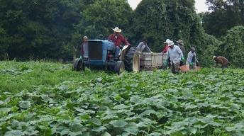 Local Farming Update