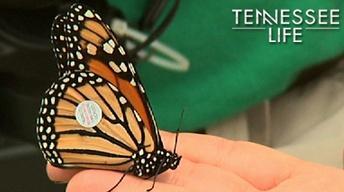 Tennessee Life - 207 - Animals