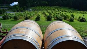 Six Mile Creek Vineyards