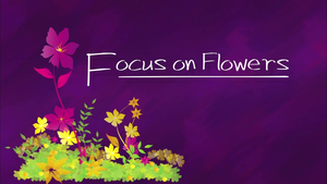 Focus on Flowers