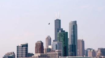 Building a Bird-Safe City