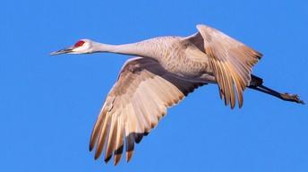 Crane Chasing