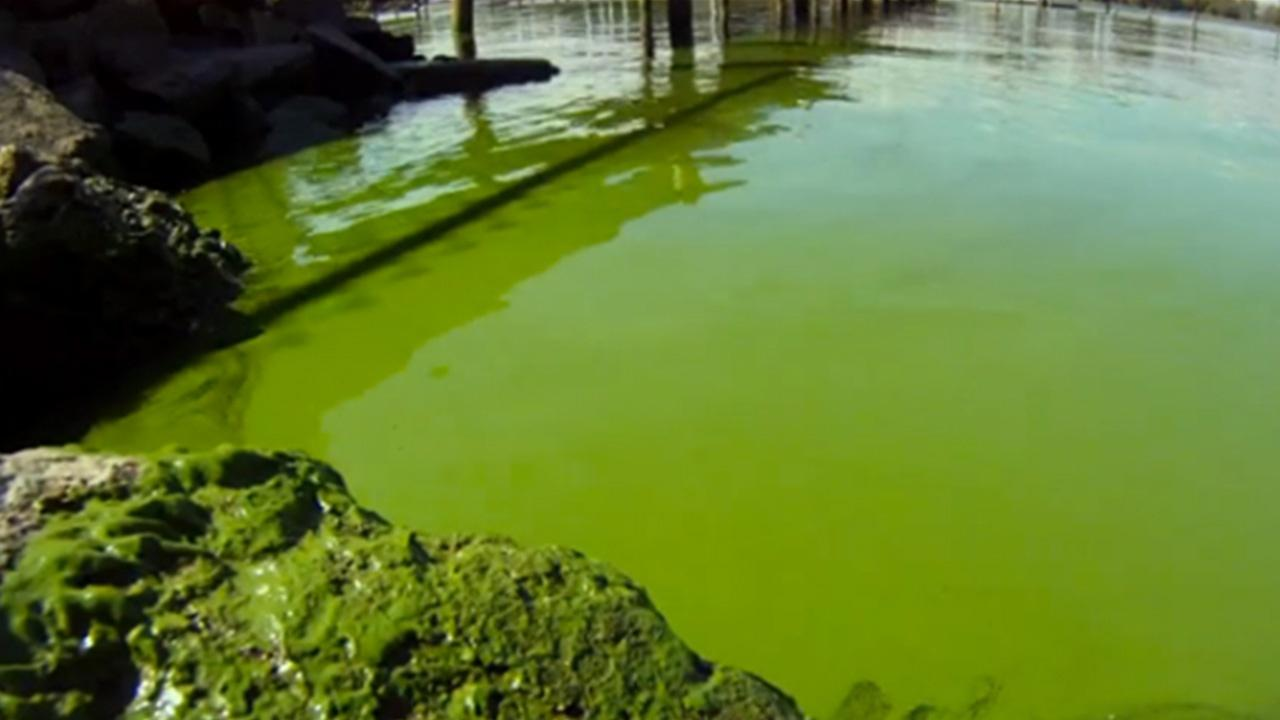 Algae Blooms in the Great Lakes