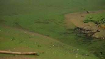Great Lakes Now Update: Algal Blooms