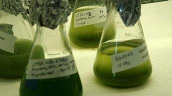 Algae Retrospective