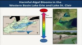 Tackling Algal Blooms in the Great Lakes | Great Lakes Forum