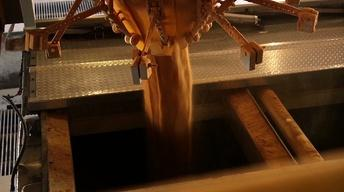 Dried Distillers Grains
