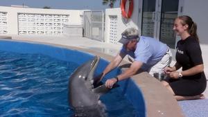 ONE Central Florida: Dolphin Encounter