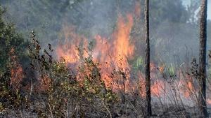 Controlled Burns and Nature's Fury