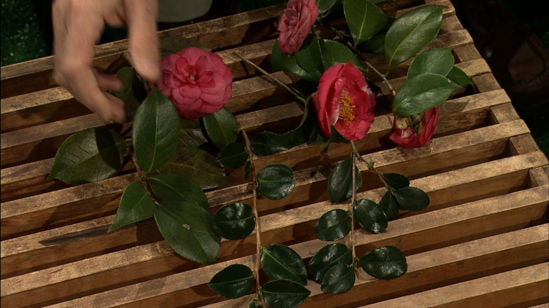 Camellia Flower Choices image