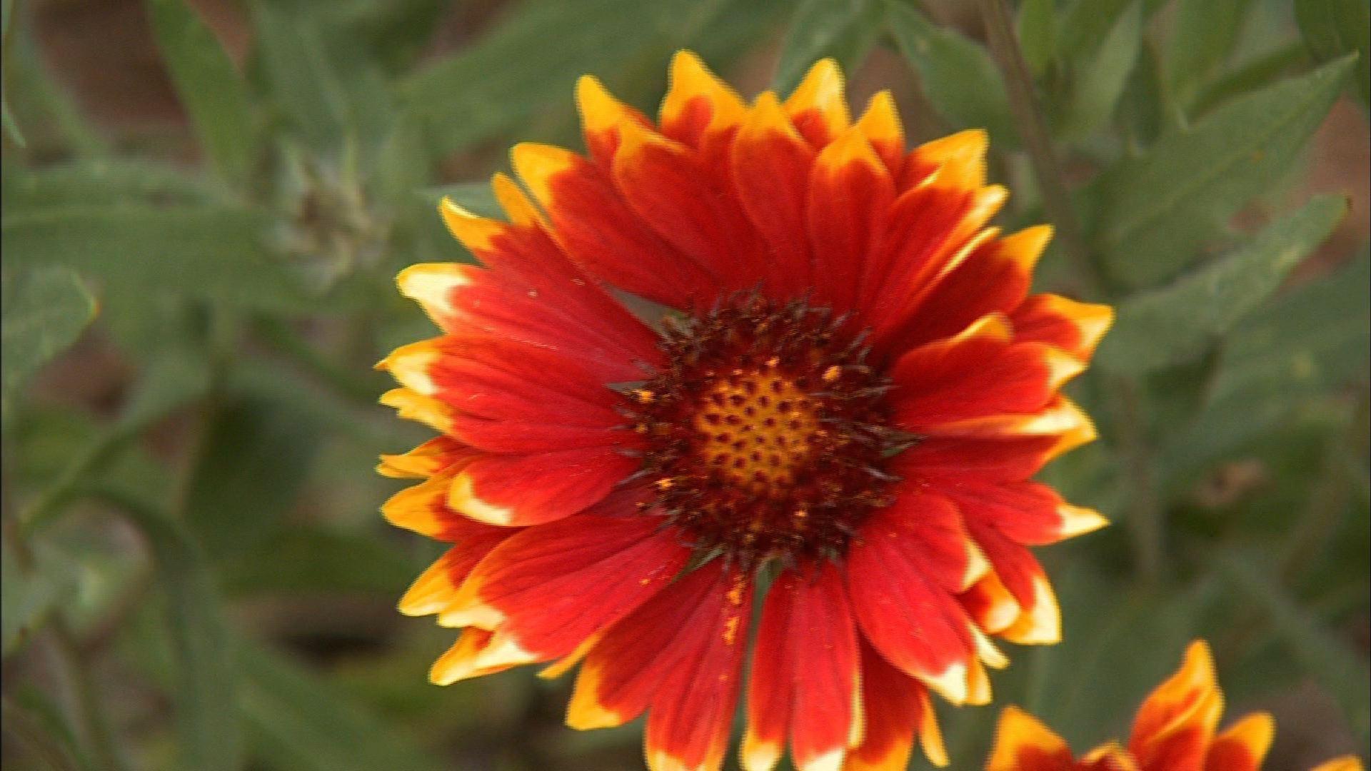 Rain Garden Protection image