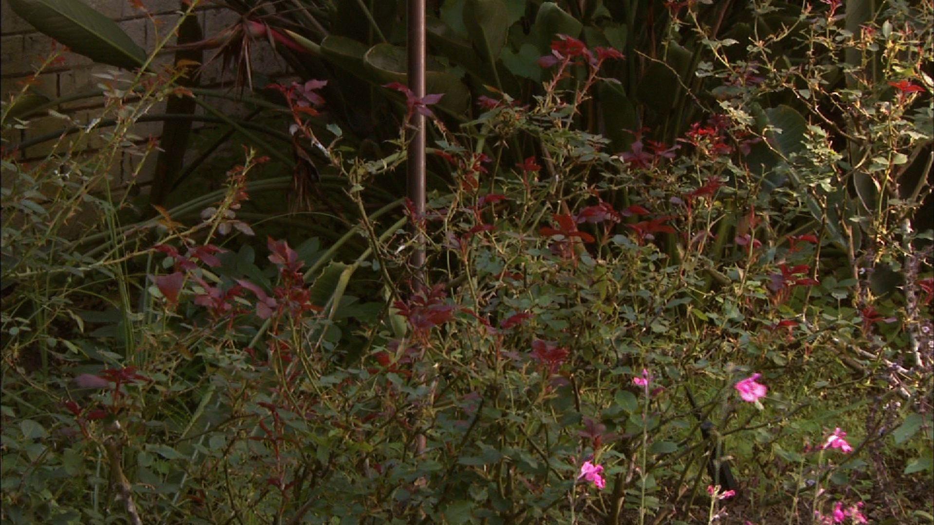 Deer Resistant Plants image