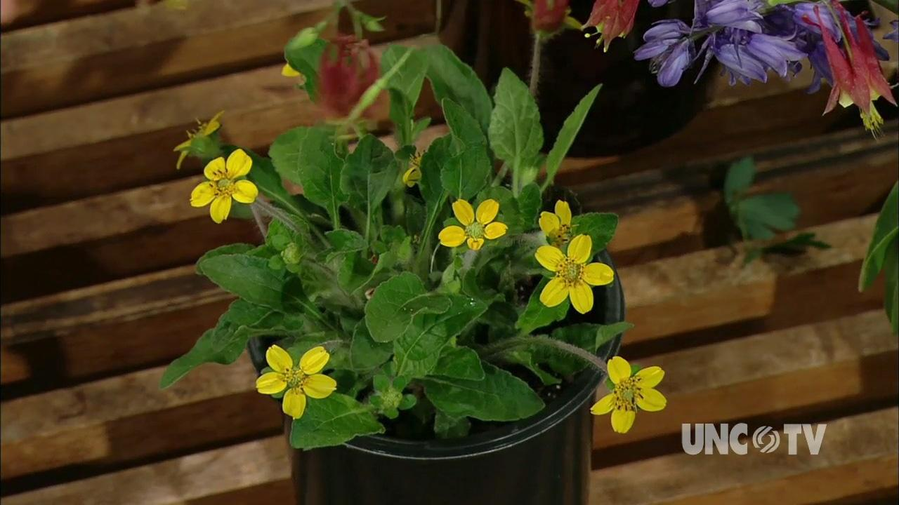 Growing NC Native Plants image
