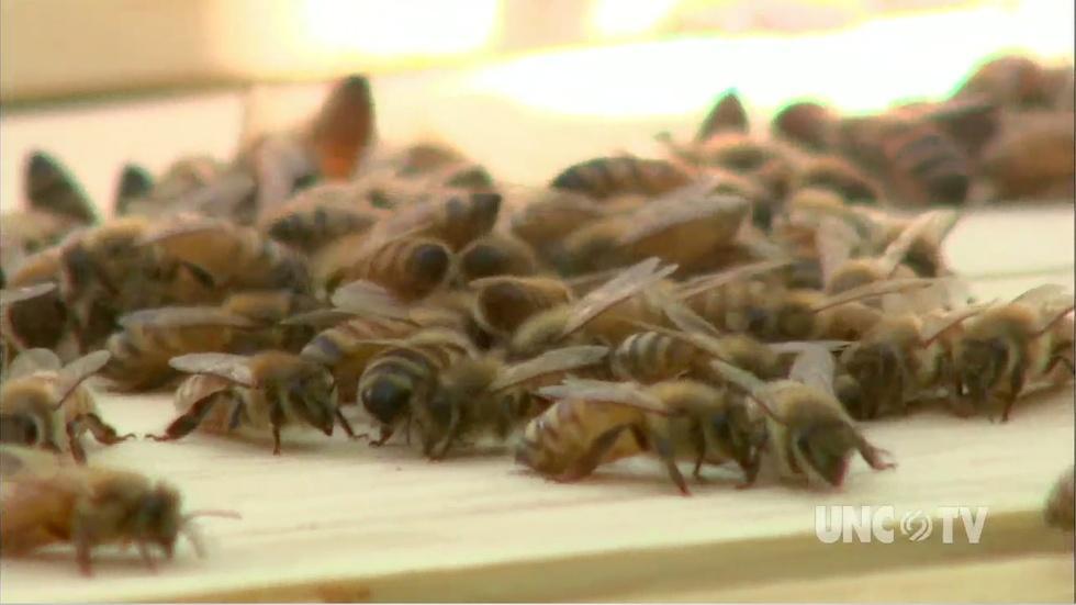 Checkout a Bee Hive image