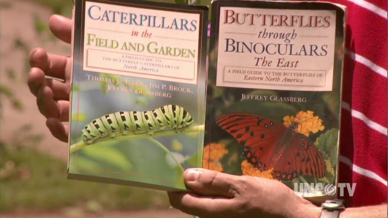 Attracting Butterflies image