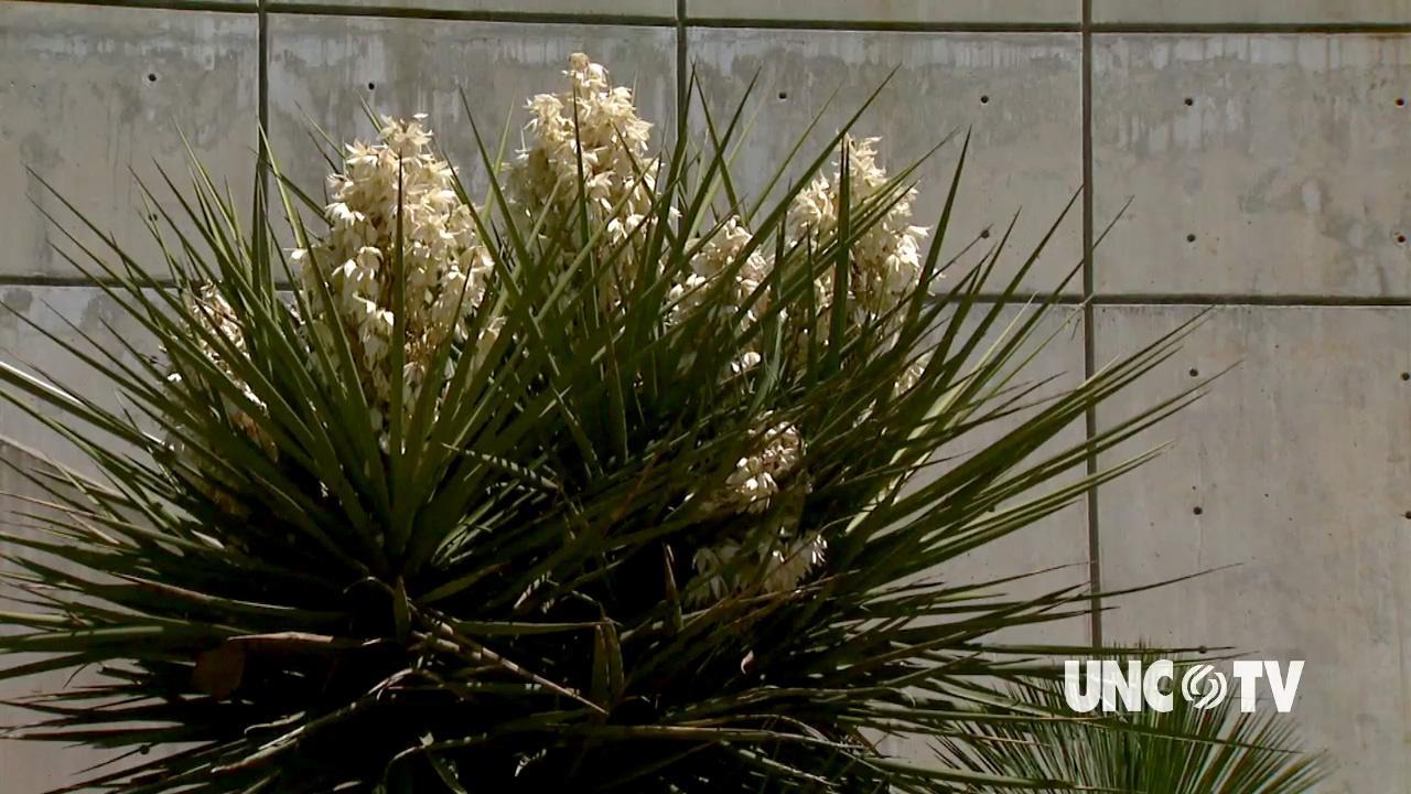 Growing Hot Weather Plants image