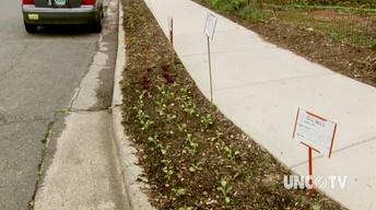 Curb Side Gardening image