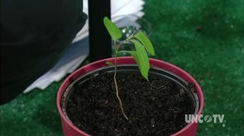 Potting Viburnum Plants image