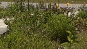 Controlling Bermuda Grass in Your Landscape