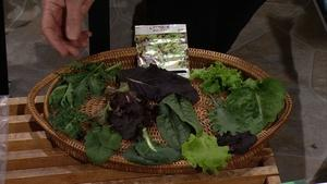 Selecting Salad from a Mesclun Mix