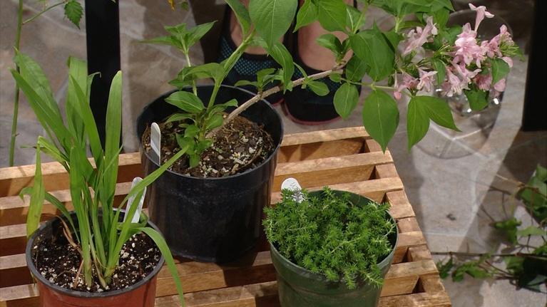 Showing Passalong Plants
