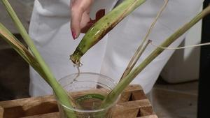 Using Lemongrass in Cooking
