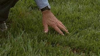 Growing a Fescue Lawn