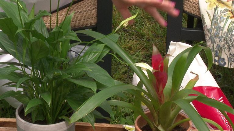 Working with House Plants