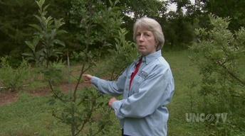 Planting Backyard Orchard image