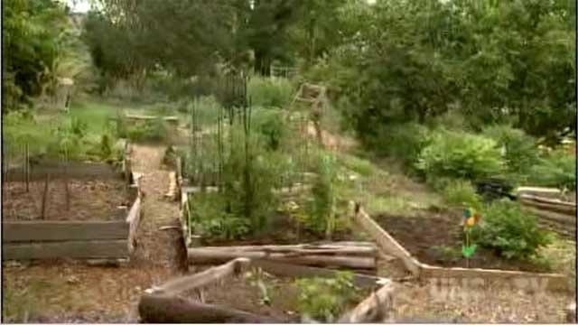 SEEDS Community Garden image